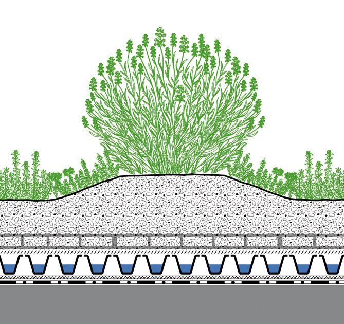 Geliebte Intensive Dachbegrünung | ZinCo Dach-Systeme - heinze.de @KC_79